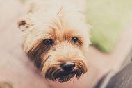 L'éducation du chien et les bases de l'éducation du chien