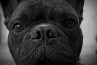 Conscience ou pensée du chien