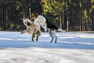 Peurs et phobies chez le chien