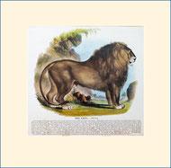 lion, SPCK