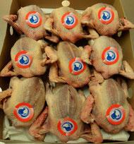 Pigeonneaux Prêts à Cuire (PAC)
