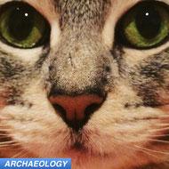 cat ancient DNA aDNA spread