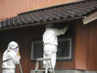 珠洲市蜂の巣駆除