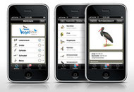 NABU-Vogelführer online und als kostenlose Handy-App