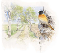 """Lesen Sie unter """"Aktuelles"""" die Einführung zu unserem Buch """"Die Vögel des Ipweger Moores""""."""
