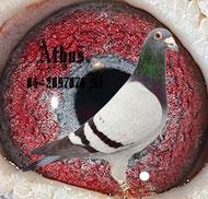 Athos NL04-2097878 blau