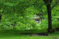 桑の木の下のブランコ