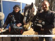 Holzrücken mit Pferden in Mecklenburg Vorpommern