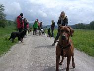 Gruppentraining für Hunde