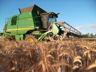 Moisson de blé 2013