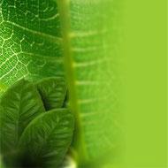 Farmacognosia plantas medicinales