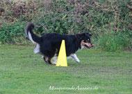 Pätkis ist der er einzige Hund mit bestandenen Prüfungen in den höchsten Obedience und Rally-Obedience-Klassen unter amerik. Reglement (ASCA) und deutschem (VDH bzw. FCI)! Erster ASCA Obedience Trail Champion OTCH-O in Europa!