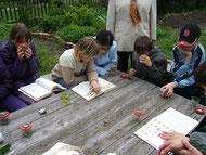Anmeldung Grünes Klassenzimmer