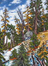 Nr.144  Bergwald im Herbst