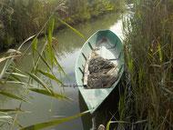roubine Camargue visite biodiversité canaux sauvages