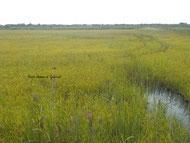 visite petit train rizières agro écologie Camargue