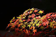 紅葉の写真集