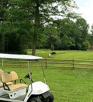 Visite à nos chevaux