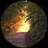 Dunkler Waldweg, der ins Sonnige führt