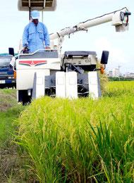 米どころ石垣島で1期米の収穫が始まった=新川平田原の山根さん水田