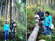 建主が選んで伐採した杉の木