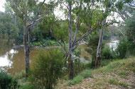 Yarra River, Westerfolds Park