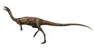 Bild eines Elaphrosaurus