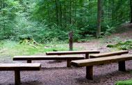 Waldbestattung (Teil 1): Das FriedWald Konzept