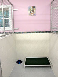 Our spacious kennels