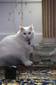 Lotus Moon猫氏