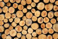Der erste Bauminvestments-Fonds der Querdenker GmbH