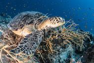Turtle - Foto von Urs Florin