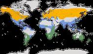 Karte zur Verbreitung der Gattung der Löffelenten