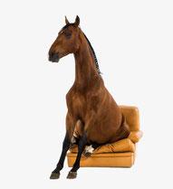 Un cheval assis sur un fauteuil