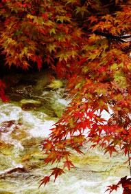 川面に色づく紅葉が映える。