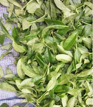 紅茶葉発酵