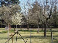 Obstwiese mit alten und jungen Bäumen