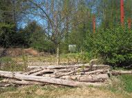 Totholz-Stapel sind wichtige Lebensräume