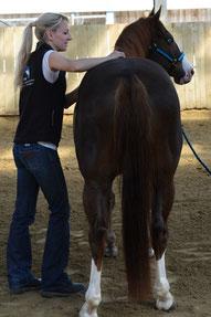 Dorntherapie Pferd