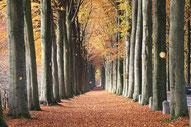 Il faggio in autunno