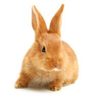 Alles für Kaninchen