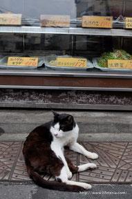 LifeTeria blog 沖縄タウン