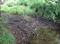 La Louyre à sec 24 juillet 2015, ruisseau, rivière, étiage