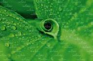 Grün hat eine beruhigende Wirkung