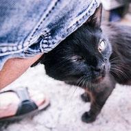 Gatos, colonia, Málaga
