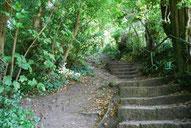 Eine Steintreppe führt durch dichtes grünes Laub nach oben
