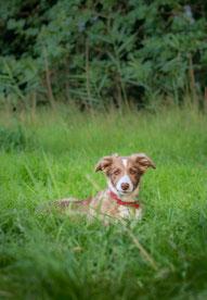 Pup instuif Hondenschool De Lijn open inloop