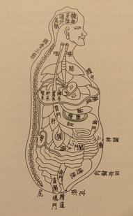 東洋医学的な内臓の図