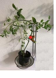 Affaldsstativ / affaldsstativer til sortering i et køkken, her som planteholder til tomatplante. Brug affaldssorteringssystem Flower i dit køkken!