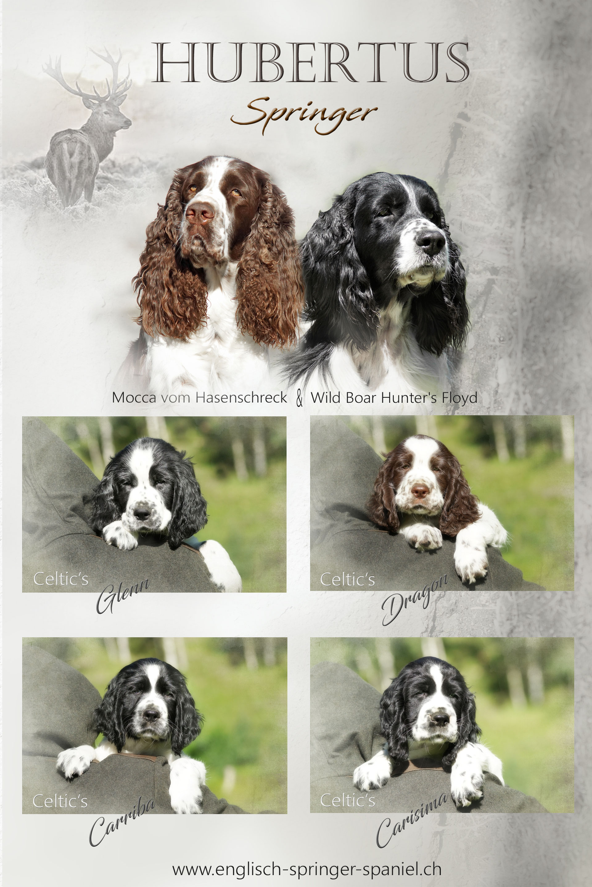 C Wurf Celtic S 06 Mai 2020 Englisch Springer Spaniels Jimdo Page
